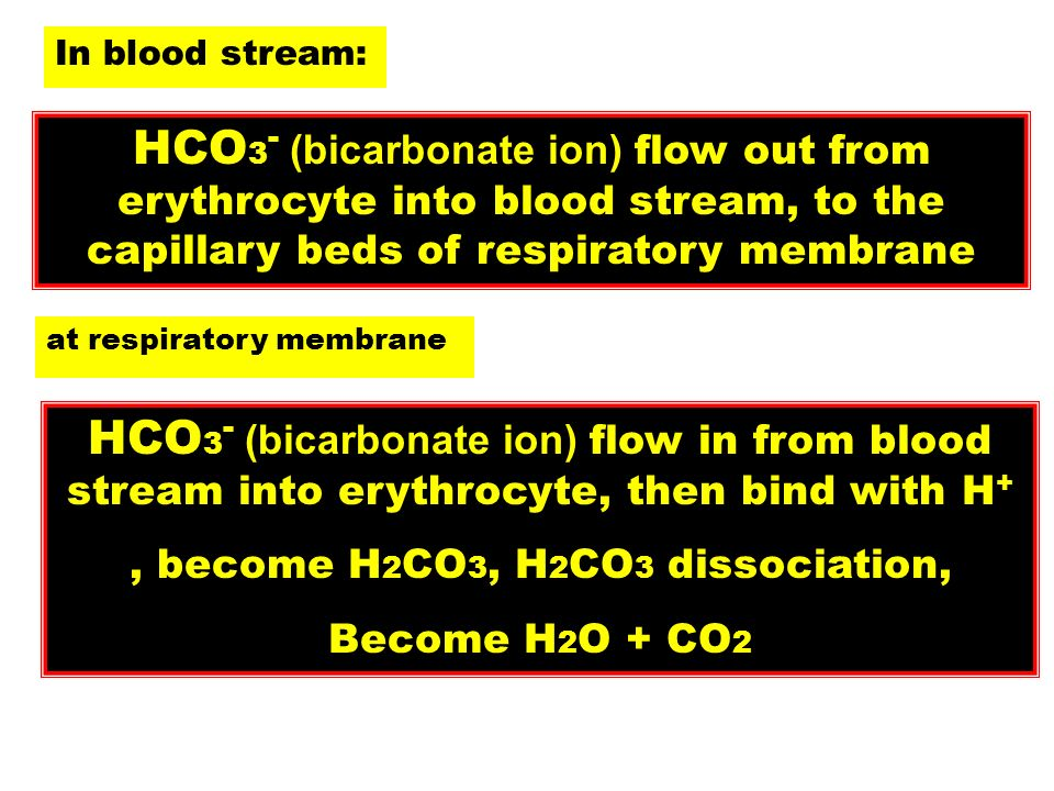 , become H2CO3, H2CO3 dissociation,