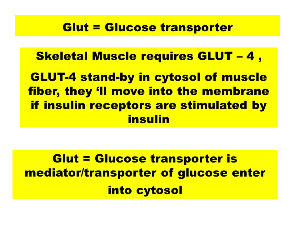 Skeletal Muscle requires GLUT – 4 ,