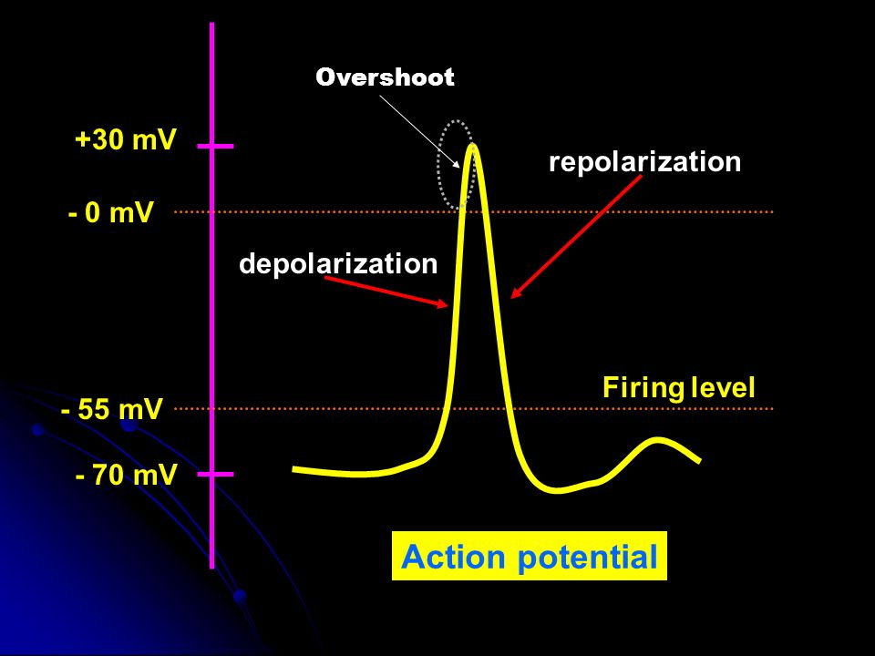Action potential +30 mV repolarization - 0 mV depolarization
