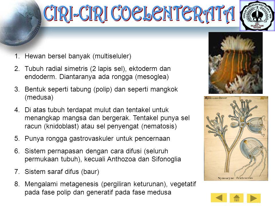 9100 Gambar Polip Hewan Coelenterata Gratis Terbaru