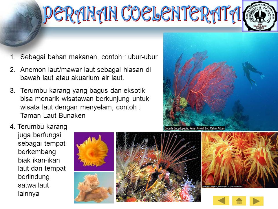 5000 Contoh Gambar Hewan Coelenterata HD Terbaru