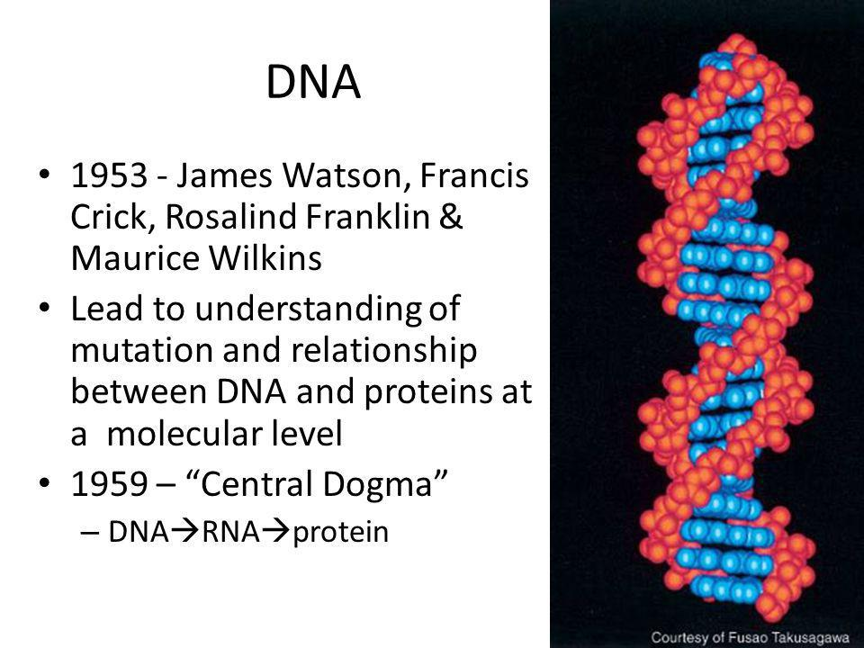 DNA 1953 - James Watson, Francis Crick, Rosalind Franklin & Maurice Wilkins.
