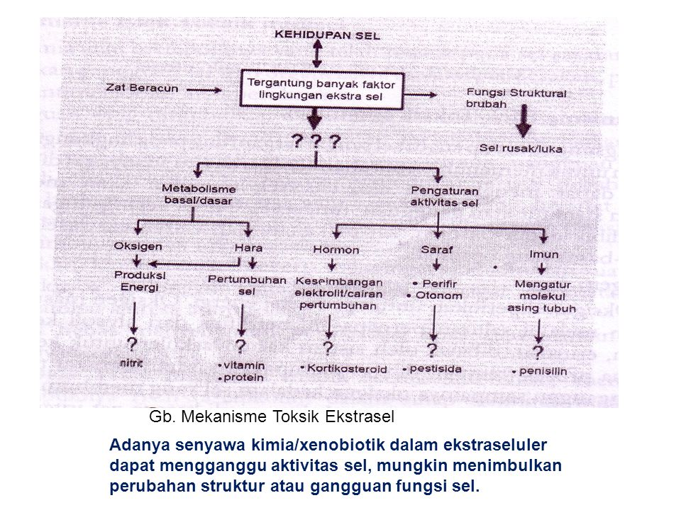 Efek Toksik Suatu Zat Xenobiotik Ppt Download