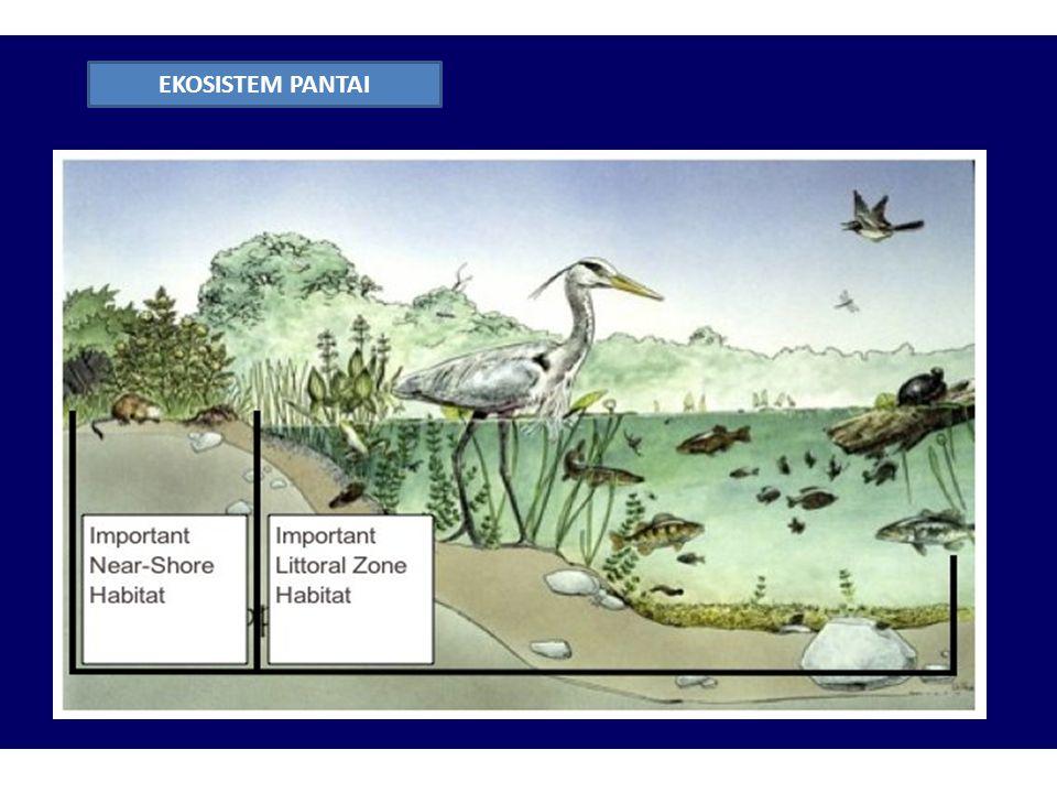 Konsep Ekosistem Ppt Download