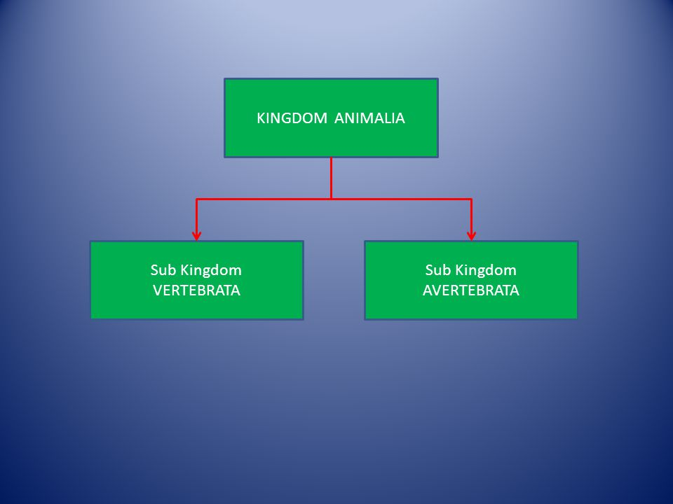 KINGDOM ANIMALIA Sub Kingdom VERTEBRATA Sub Kingdom AVERTEBRATA
