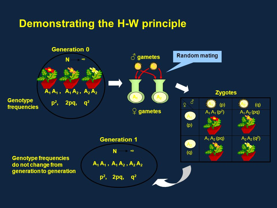 Demonstrating the H-W principle