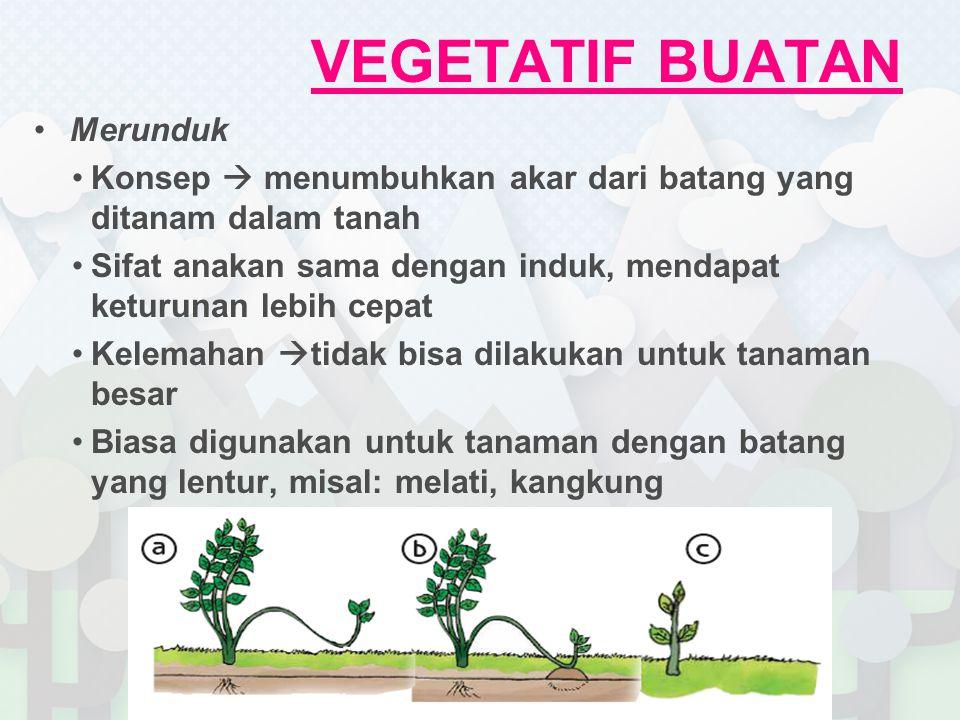 Perkembangbiakan Vegetatif Tanaman Ppt Download