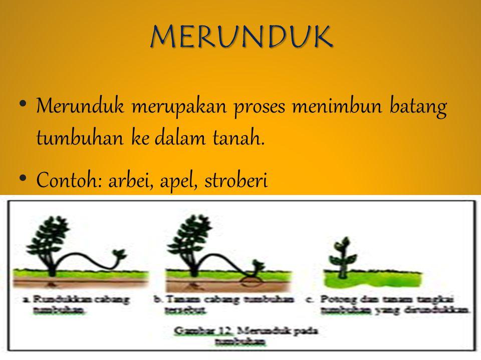 Perkembangbiakan Tumbuhan Ppt Download