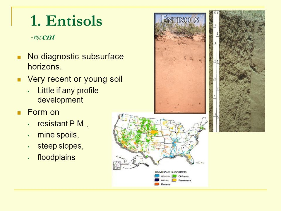 1. Entisols -recent No diagnostic subsurface horizons.