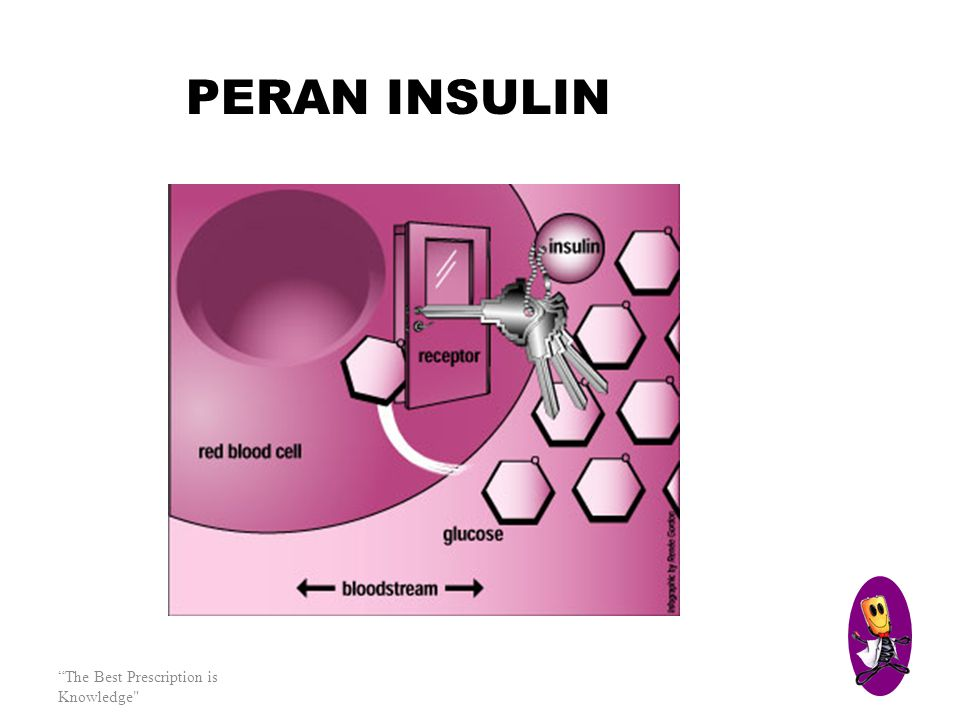 PERAN INSULIN The Best Prescription is Knowledge