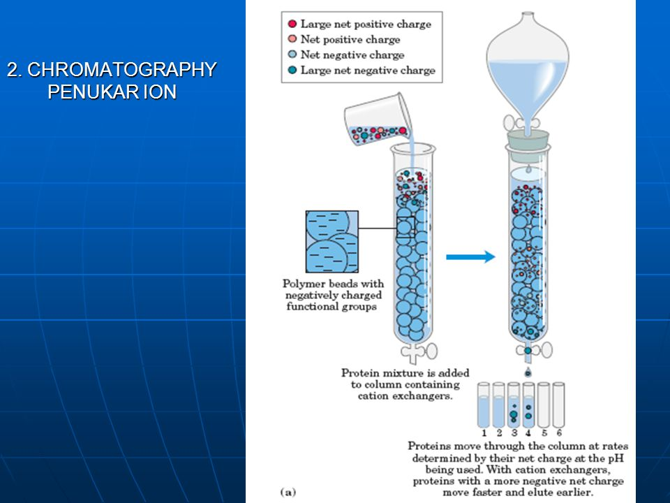 2. CHROMATOGRAPHY PENUKAR ION