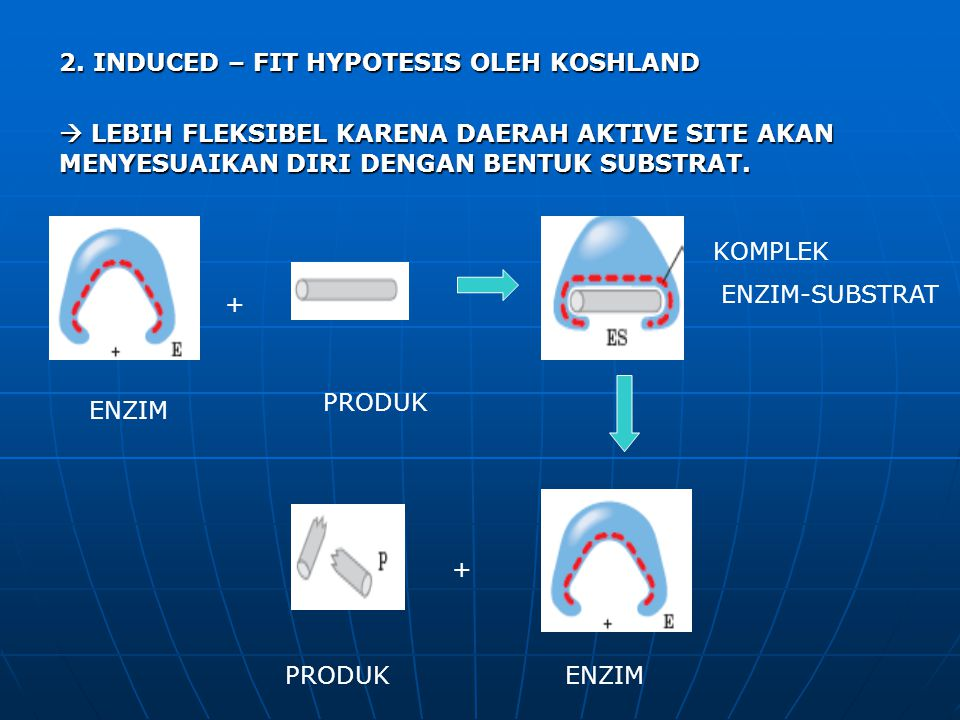 2. INDUCED – FIT HYPOTESIS OLEH KOSHLAND