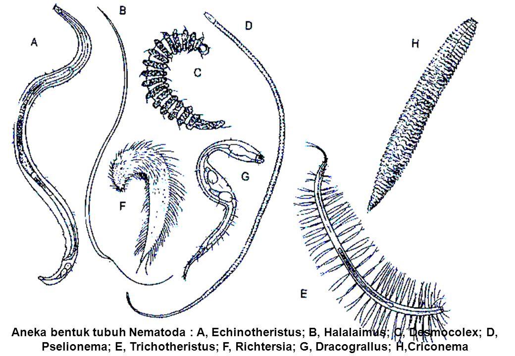 nematod aschelminthes