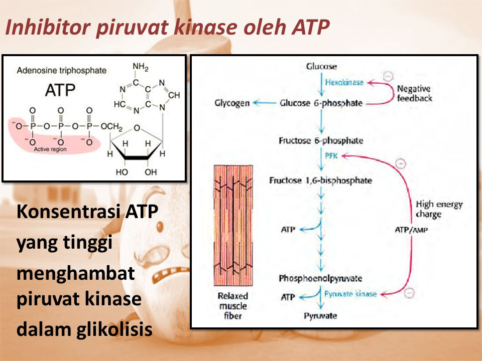 Inhibitor piruvat kinase oleh ATP