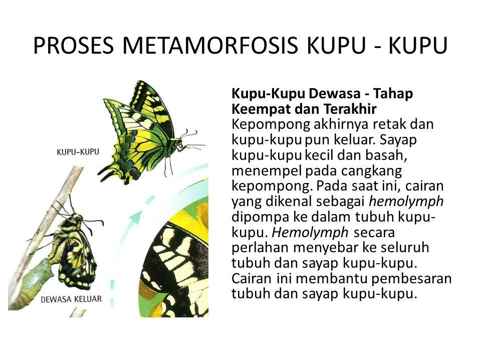 440 Koleksi Gambar Metamorfosis Hewan Kupu Kupu Gratis Terbaru