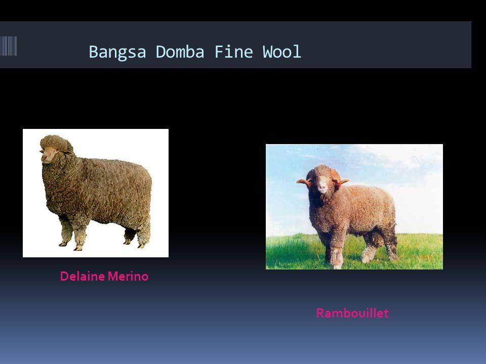 Domba Dan Kambing Ppt Download