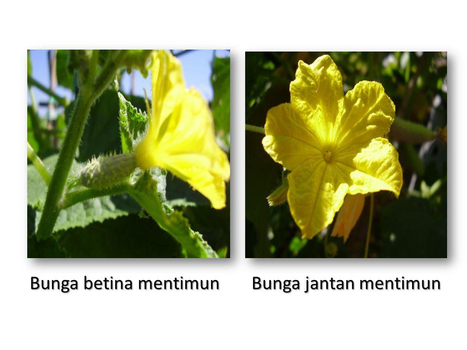 55+ Gambar Bunga Jantan Paling Mekar