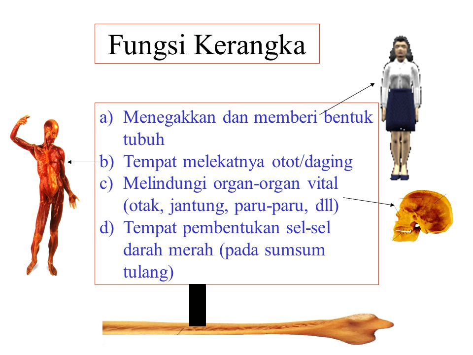 Rangka Manusia Ppt Download