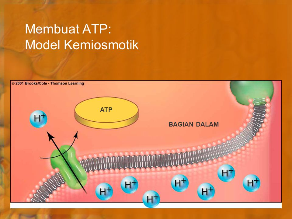 Membuat ATP: Model Kemiosmotik