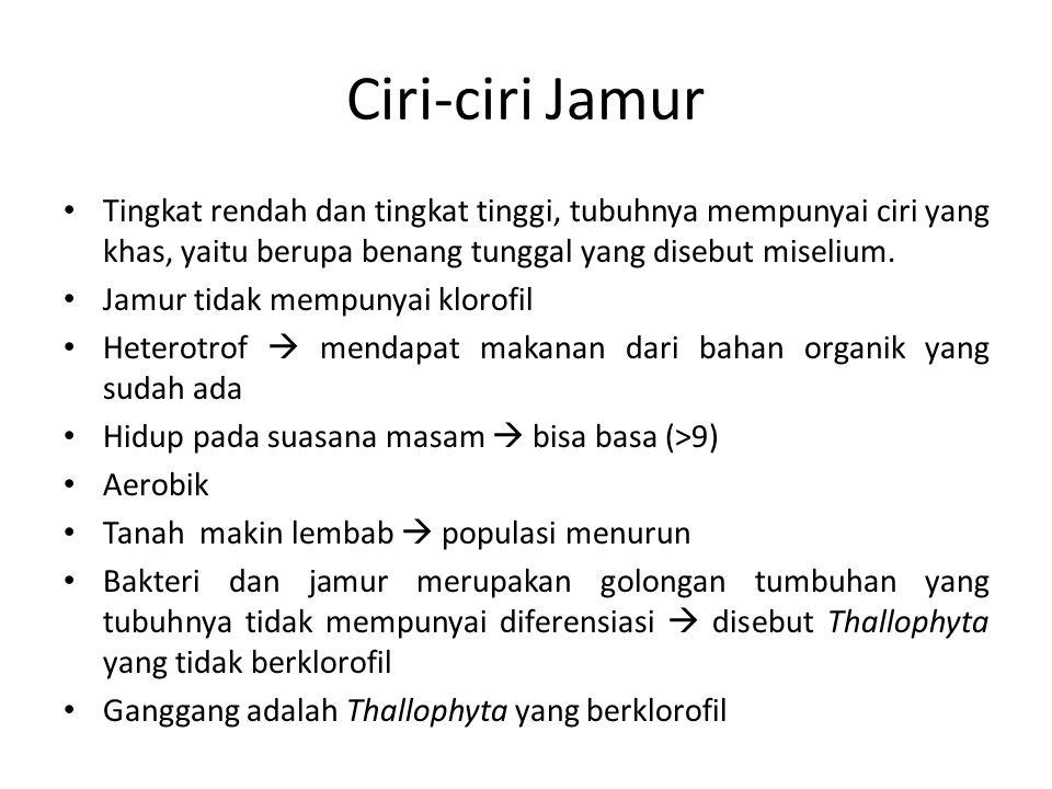 BAB III. JAMUR Pendahuluan Ciri-ciri Jamur - ppt download