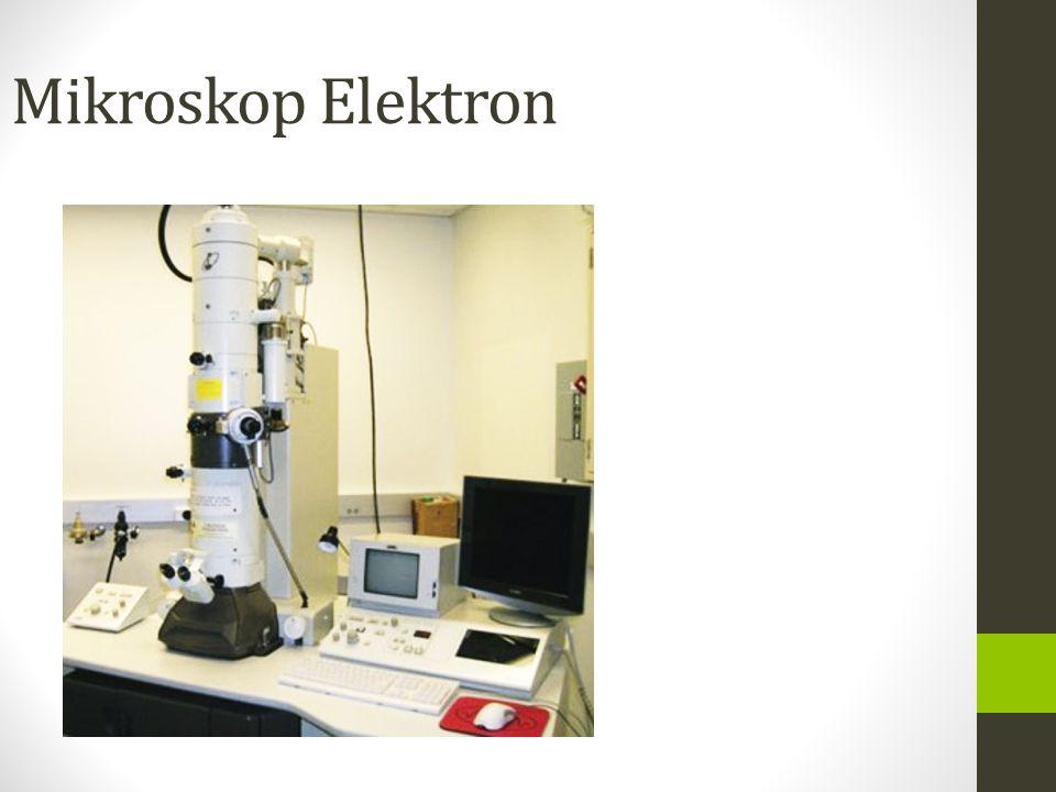 Perbedaan mikroskop biologi dan mikroskop stereo dalam
