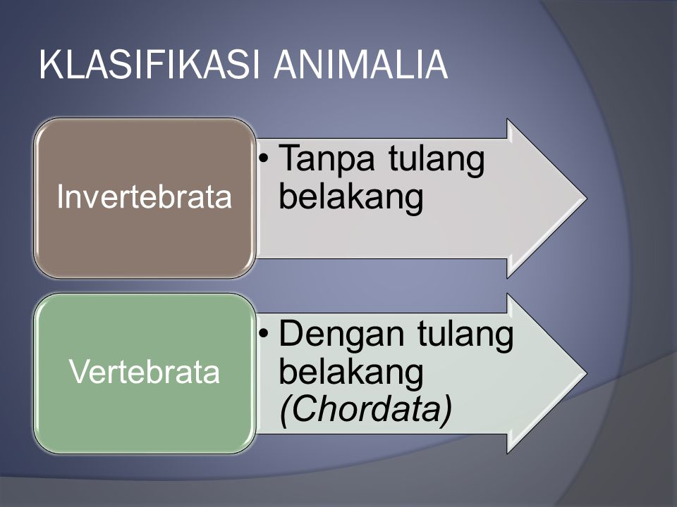 Image of: Plantae Klasifikasi Animalia Invertebrata Slideplayerinfo Kingdom Animalia Ppt Download