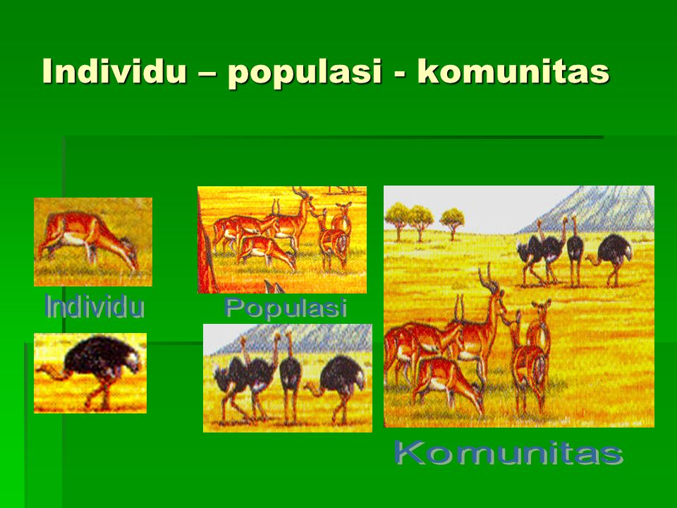 Ekosistem Ppt Download